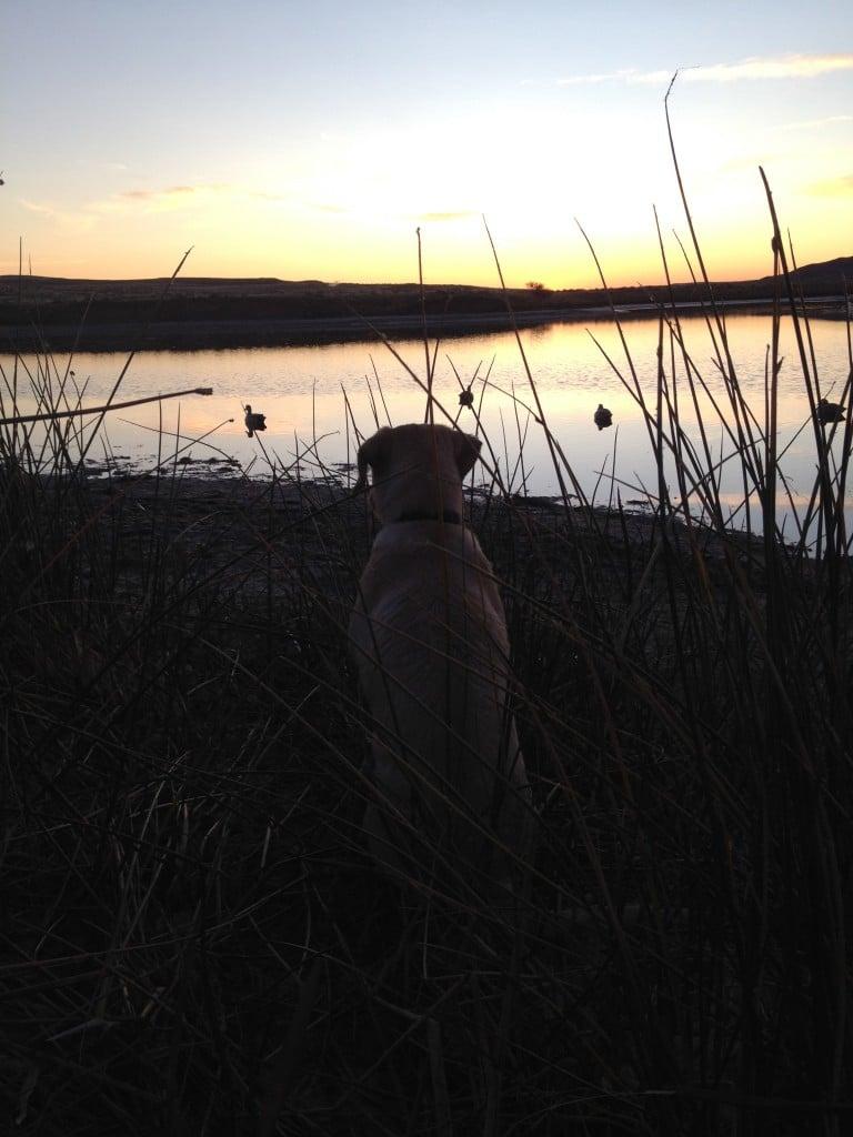 waterfowl sunrise