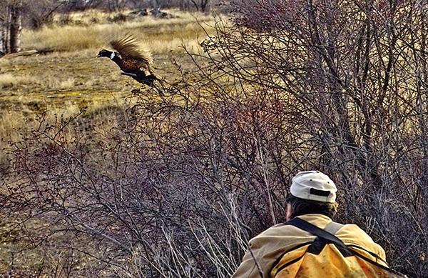 Bird Hunter Robin Poole