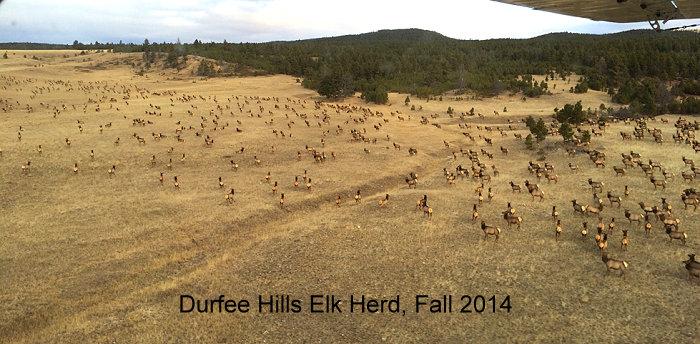 Durfee Hills elk herd