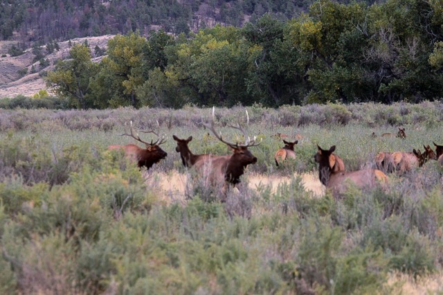 Montana fish wildlife parks wildlife management areas for Montana fish and wildlife