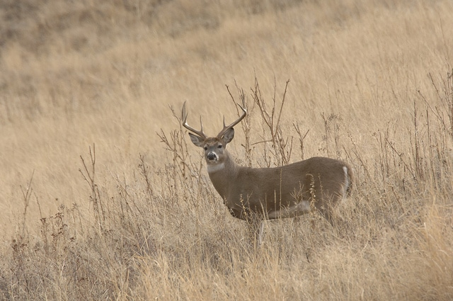 Montana's big game and hunting heritage are at risk.
