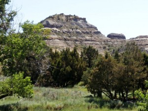 Juniper and grasslands stretch out over the Horse Creek Easement